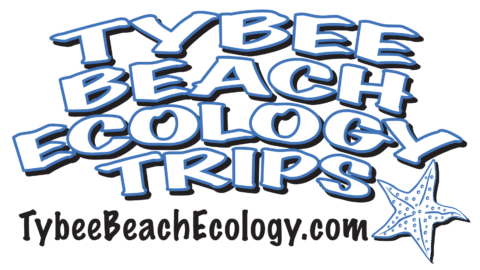 Tybee Beach Ecology Trips